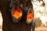Burning Inside Only #2