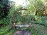 Living willow seat