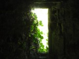 Ivy clad window in Dinefwr Castle