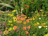 6 August 2006: Joyce and Mick's garden