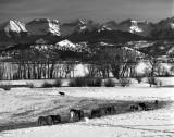 Horses and the Sneffels Range