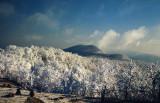 Rime on the Blue Ridge #3