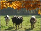 Nature & Rural life  2003