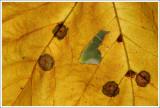 Nature & Rural life  2009