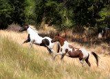 Flying O Ranch
