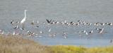 Waders at Salinas