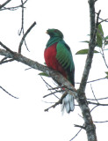 Trogons and Kingfishers