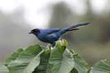 Jays, Thrushes to Warblers
