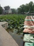 China2005-111.jpg