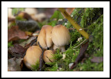 Fungi base of tree