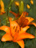 Day Lily & FlyMerrimack, NH