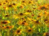 Field of FlowersSunapee, NH
