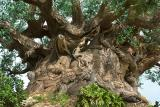 Tree of Life DetailDisney's Animal Kingdom