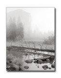 Morning Fog, Merced River & El CapitanYosemite Nat'l Park, CA