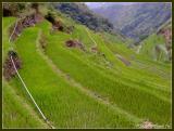 Cascading rice terraces