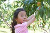 2009-09-6 Peach Picking 采苹果