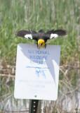 North Central US Birding June 2009