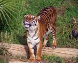 ZOO IMAGES