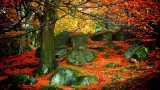 Autumn in Padley Gorge