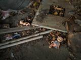 20120818-9191 HickoryRidge AR.jpg