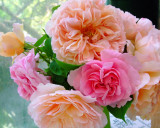 David Ausin Roses