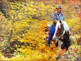 fall_colors_2009