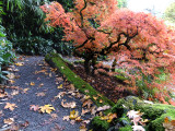 Kaboda Garden, Renton