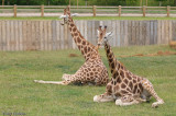 captive_animals