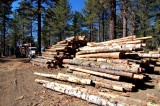 Logging the back Country of Big Bear