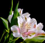 Macro Flower Photos
