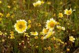 April 5, 2006Wildflowers