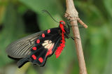 Butterflies - Mariposas