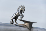 Custom - Horse