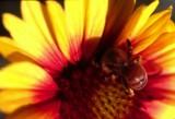 A fl bee copy.jpg