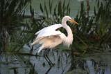 Wading Beauties of South Florida