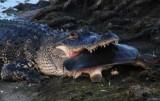 gator breakfast
