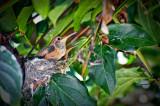 backyardhummingbirds