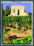 Vineyards In St.Emillion