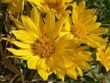 Beauty in yellow