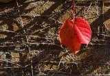 Leaf: Why Me?