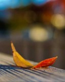 Leaf: Looking Up