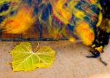 Wind & Leaf