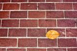 Leaf Series: Bricked