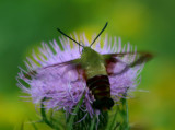 Butterflies,Birds, Bees, Nature Macro and More Orchids