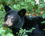 Wildlife in Monongahela National Forest