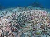 20050324-27 085 Pulau Aur hh.jpg