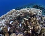 20050324-27 090 Pulau Aur hh.jpg