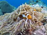 20050324-27 092 Pulau Aur hh.jpg
