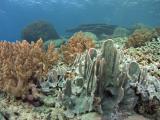 20050324-27 103 Pulau Aur hh.jpg