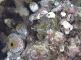 20050324-27 110 Pulau Aur hh.jpg